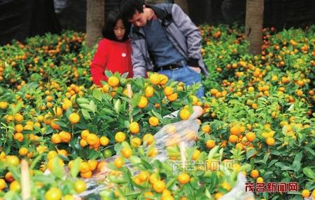 花卉市场不断升温
